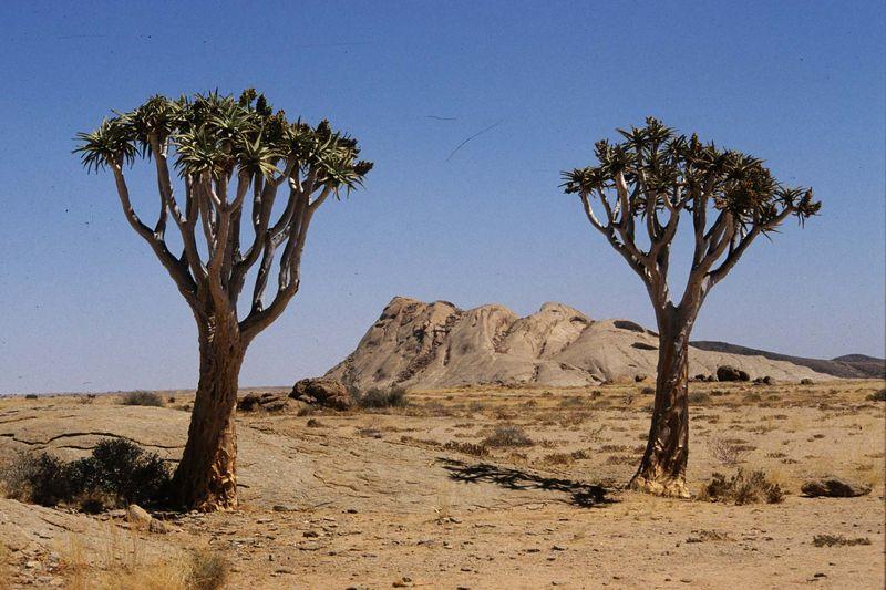 Namib desrt park2 copie