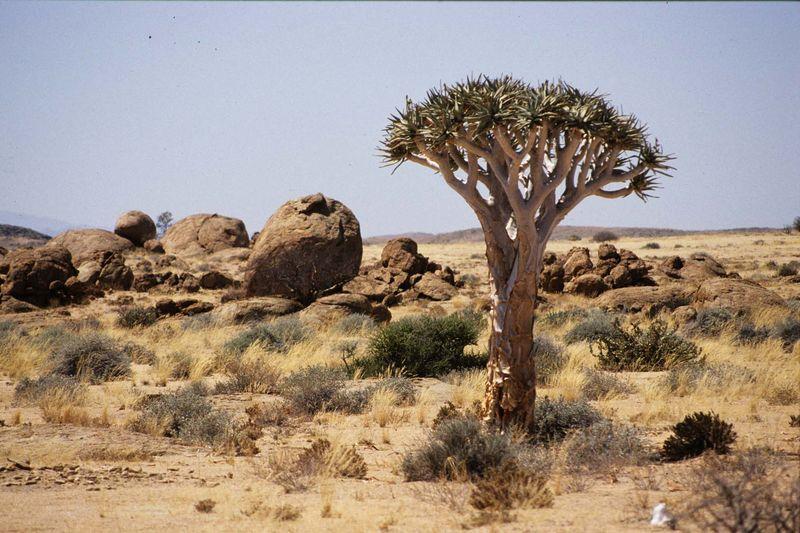 Namib desrt park3 copie
