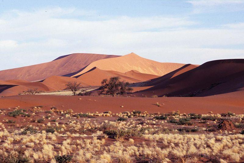 Namib desrt park11 copie