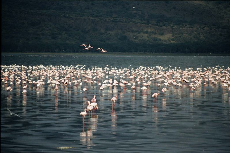 Bogoria12 copie