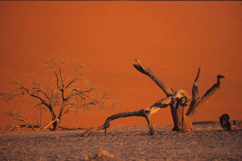 Namib7bis
