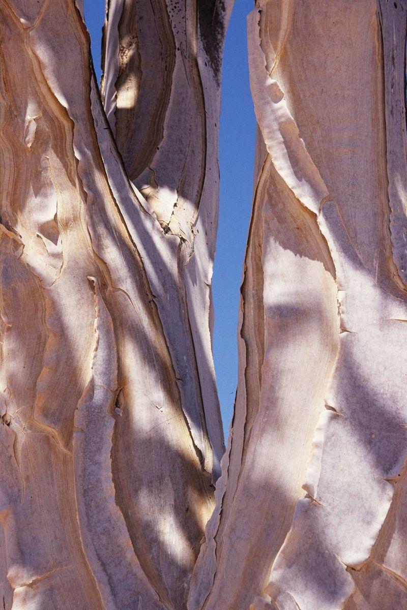 Namib desrt park4 copie