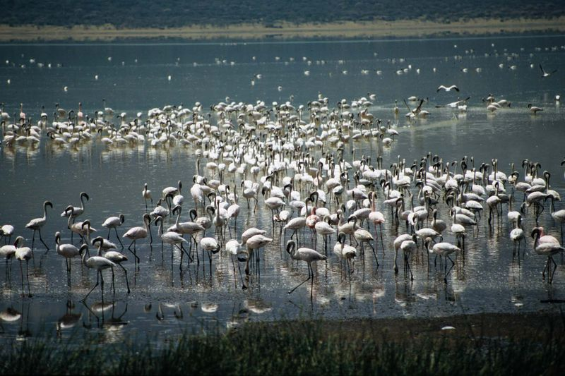 Bogoria9 copie