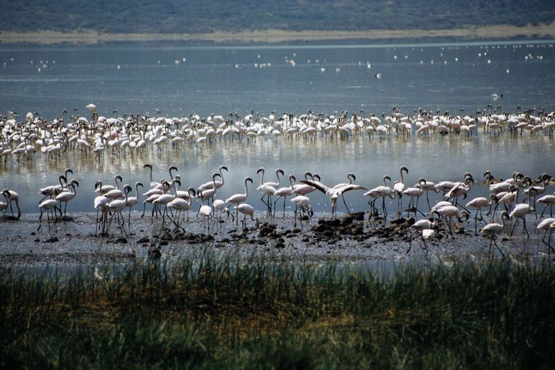 Bogoria8 copie