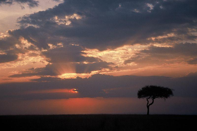 Massaî Mara
