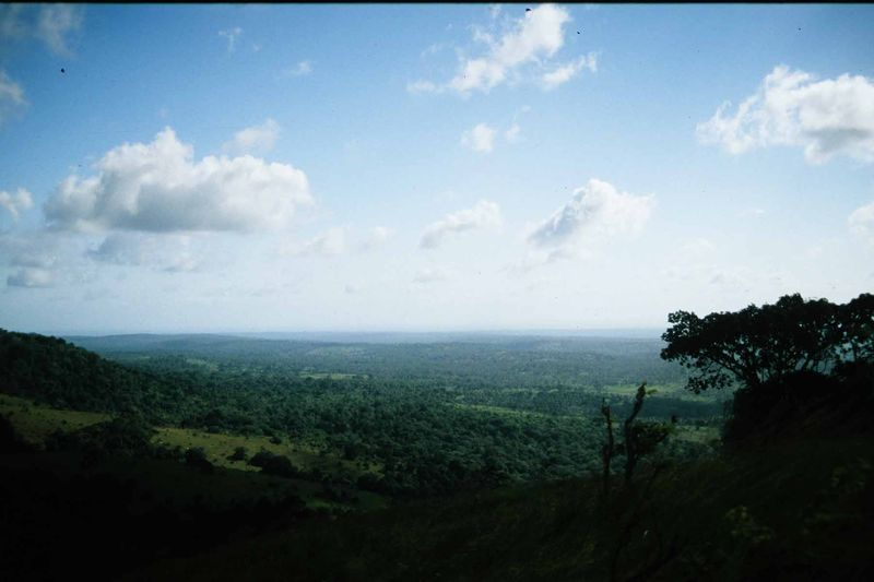 African landscape copie